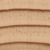 Jack Pine (endgrain 10x)