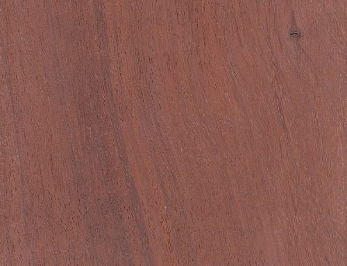 Red Bloodwood