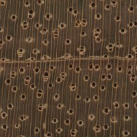 Jatoba (endgrain 10x)