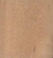 Deglupta (Eucalyptus deglupta)