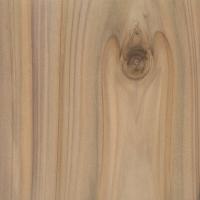 Leyland Cypress (Cupressus x leylandii)