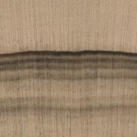 Leyland Cypress (endgrain 10x)