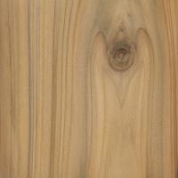 Leyland Cypress (sealed)
