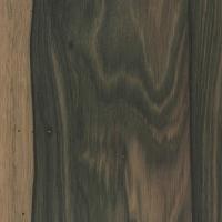 Malaysian Blackwood (Diospyros ebonasea)