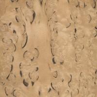 Masur Birch (sanded)