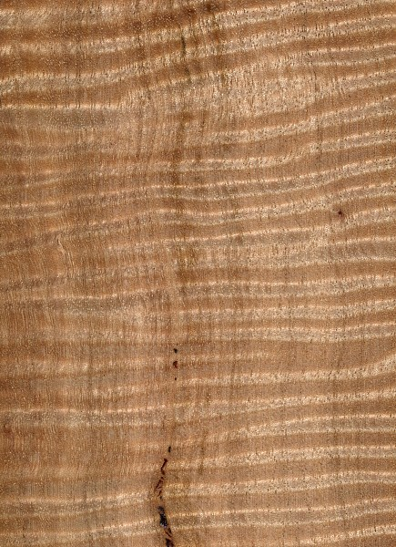 Messmate The Wood Database Lumber Identification
