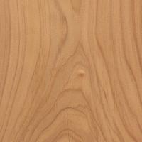 Monterey Cypress (sealed)