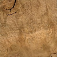 Mountain Ash (burl)