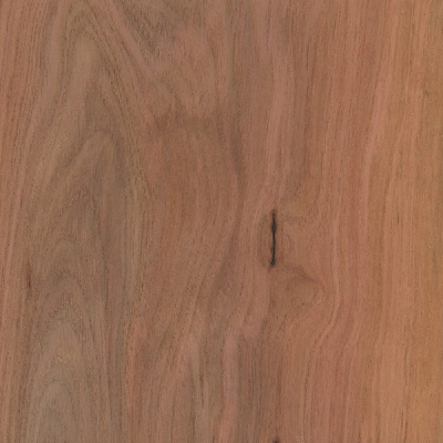 Mountain Mahogany (Cercocarpus ledifolius)