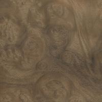 Myrtle burl (sanded)