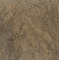Nargusta (Terminalia amazonia)