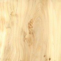 Northern White Cedar (sealed)