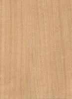 Norway Maple (sealed)