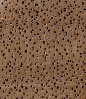 Okoume (endgrain 10x)