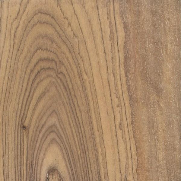 Olive The Wood Database Lumber Identification Hardwood