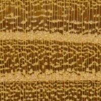 Osage Orange (endgrain 10x)