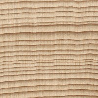 Pacific Silver Fir (endgrain 10x)