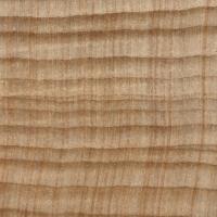 Parana Pine (endgrain 10x)