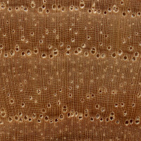 Pecan (endgrain 10x)