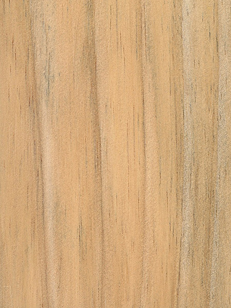 Radiata pine the wood database lumber identification for Pine tree timber