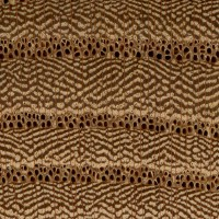Red Elm (endgrain 10x)