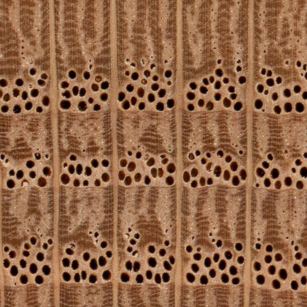 Red Oak The Wood Database Lumber Identification Hardwood