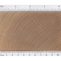 Red Oak (endgrain)