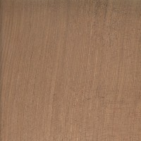 Redwood (Sequoia sempervirens)