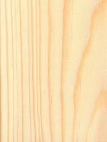 Sand Pine (Pinus clausa)