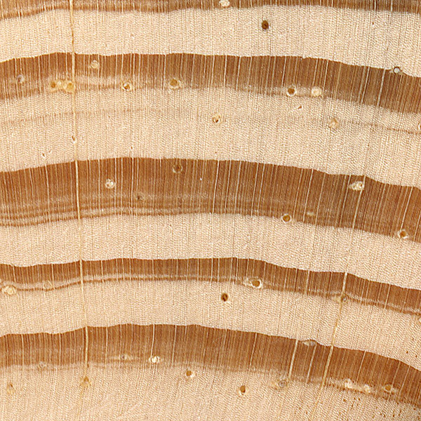 Scots Pine The Wood Database Lumber Identification