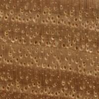 Shagbark Hickory (endgrain 10x)