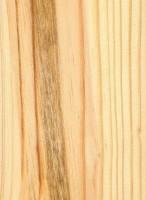 Shortleaf Pine (Pinus echinata)