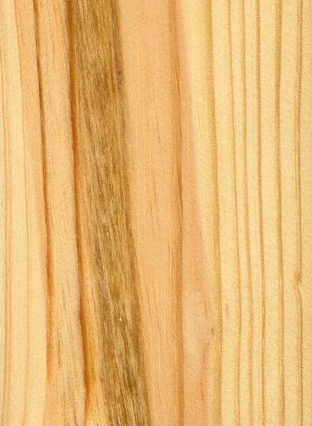 Shortleaf Pine Leaf Shortleaf Pine Sealed