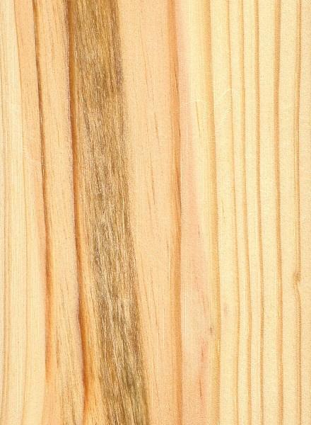 Shortleaf Pine Leaf Shortleaf-pine.jpg