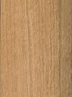 Shumard Oak (sealed)