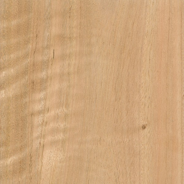 Blue gum the wood database lumber identification