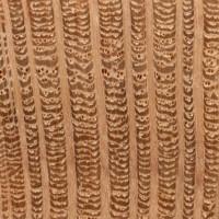 Southern Silky Oak (endgrain 10x)