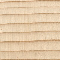 Subalpine Fir (endgrain 10x)