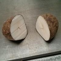 Tagua nut (cut open)
