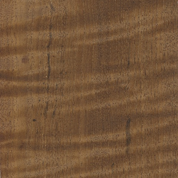 teak the wood database lumber identification hardwood. Black Bedroom Furniture Sets. Home Design Ideas
