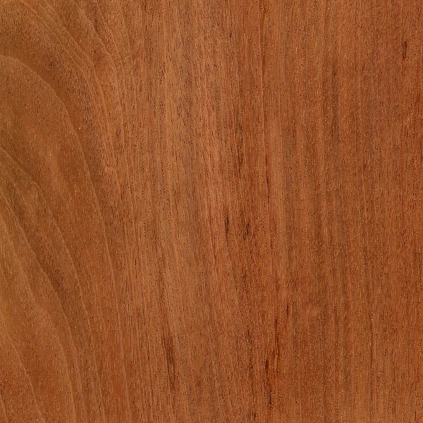Tiete rosewood the wood database lumber identification for The rosewood