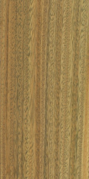 Verawood the wood database lumber identification