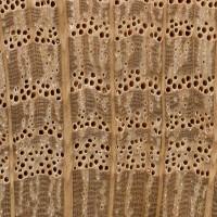 Water Oak (endgrain 10x)