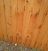 Western Redcedar (iron stained fence)