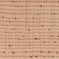 Western White Pine (endgrain 10x)