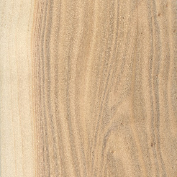 Poplar Vs Pine Which One Is Suit For Your Project