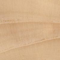 White Spruce (endgrain 10x)
