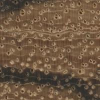 Zebrawood (endgrain 10x)