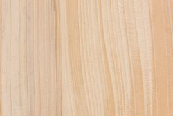 Balsam fir (Abies balsamea)