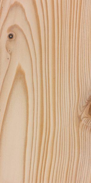Bristlecone fir (Abies bracteata)